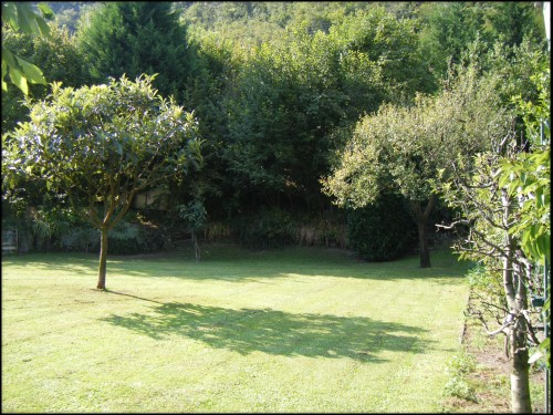 Lawn and Fruit Trees