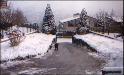 Drive-Way in Winter